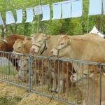 Journée de l'élevage - Place de la Hourquie